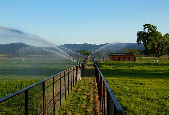 Equine paddock irrigation system