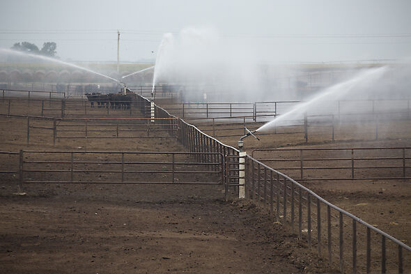 Automated solid set Big Gun Sprinklers maintain optimal feedlot conditions.