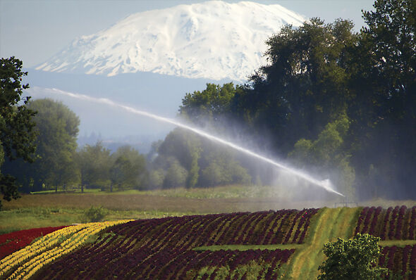 Big Gun® Sprinkler irrigating nursery stock with Mt. Hood in the background.