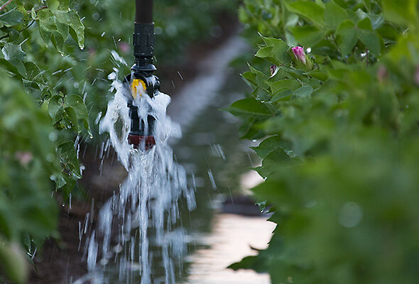 Bubbler sprinkler irrigation cotton in Texas