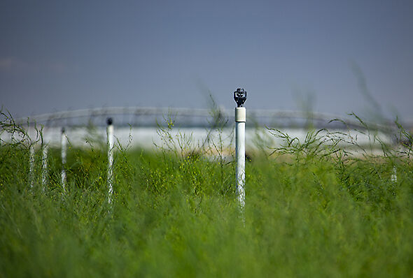 Rotator® technology is another great option for irrigating corners.