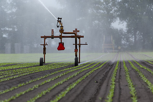 Big Gun Sprinklers are adaptable for a variety of crops in hose reel irrigation.